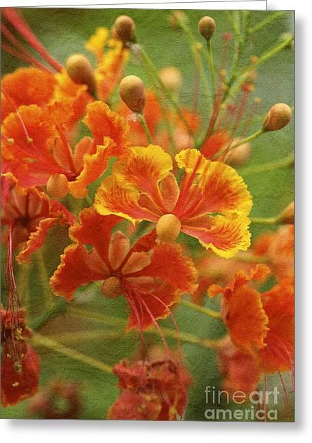 Pamela Gail Torres Greeting Cards - Paradise Greeting Card by Pamela Gail Torres