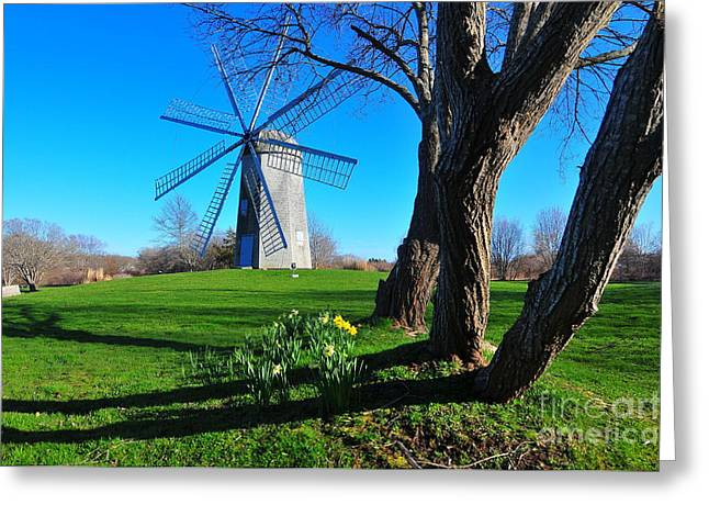 Paradise Park Windmill Greeting Card by Catherine Reusch  Daley