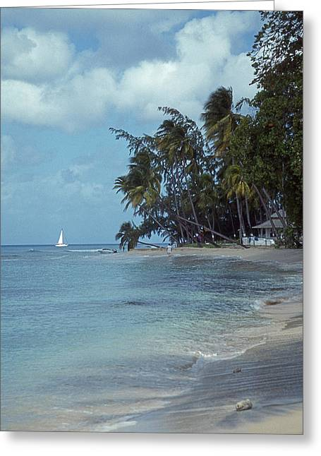 Scenic Tours Greeting Cards - Paradise Greeting Card by Skip Willits