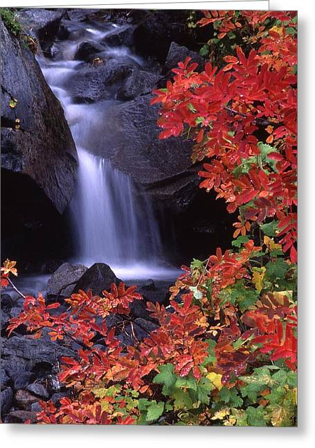 Paradise Valley Stream In Fall Greeting Card by Ken Dietz