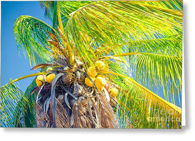 Niu Greeting Cards - Paradiso Tropicale - and the sky sings Greeting Card by Sharon Mau