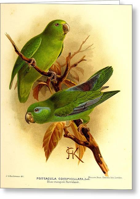 Parakeet Paintings Greeting Cards - Parakeet Greeting Card by J G Keulemans