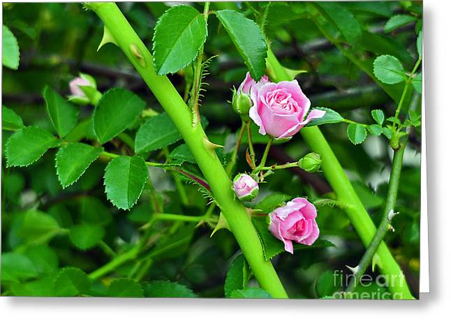 Pink Flower Prints Greeting Cards - Parallel Vines Greeting Card by Al Powell Photography USA