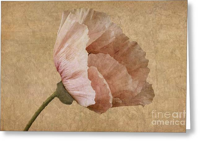 Saturated Greeting Cards - Parchment Greeting Card by John Edwards
