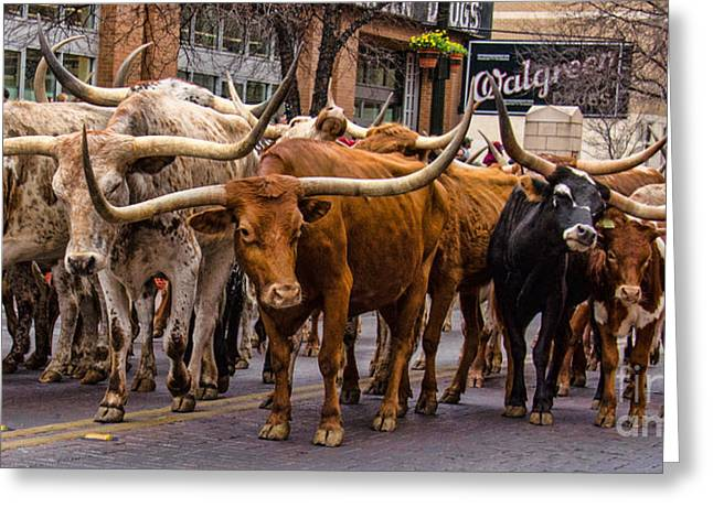 Texas Cowgirl Greeting Cards - Pardon Me Excuse Me Greeting Card by John Kain