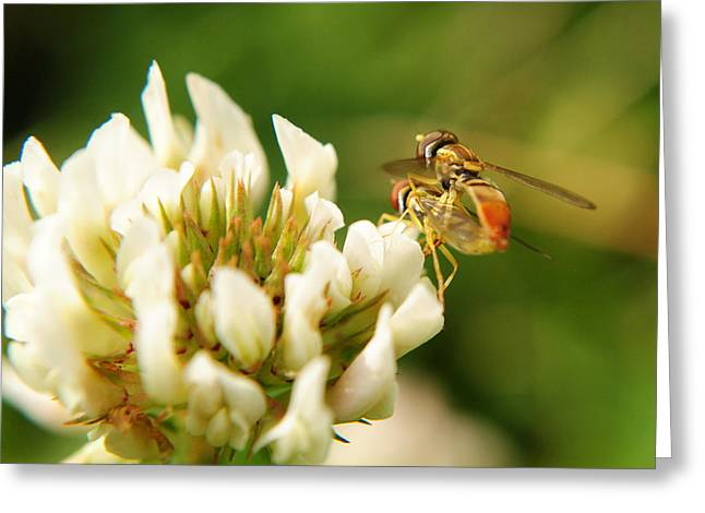 Stinger Greeting Cards - Pardon the Intrusion Greeting Card by Frozen in Time Fine Art Photography