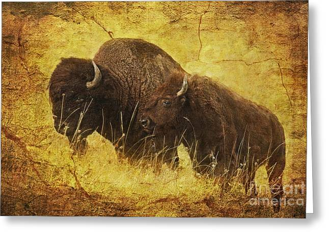 Bison Range Greeting Cards - Parent and Child - American Bison Greeting Card by Lianne Schneider