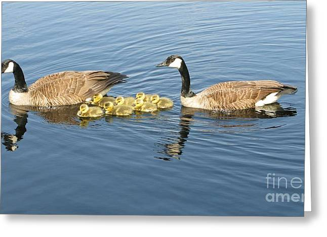 Best Sellers -  - Mother Goose Greeting Cards - Parenting Greeting Card by Ann Horn