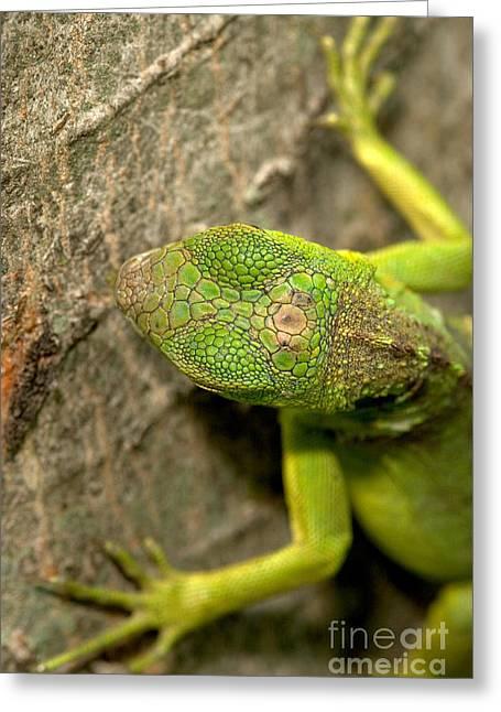 Lizard Head Greeting Cards - Parietal Eye of an Iguana Greeting Card by Kenneth M Highfill