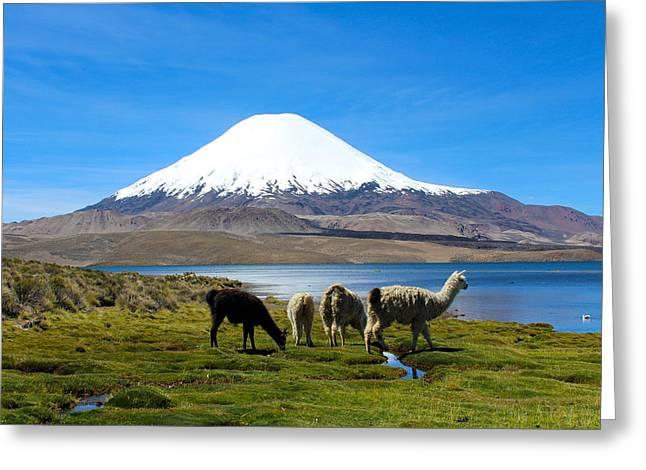 Llama Photographs Greeting Cards - Parinacota Volcano Lake Chungara Chile Greeting Card by Kurt Van Wagner