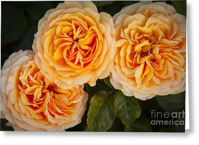 Garden Grown Photographs Greeting Cards - Paris Flowers Greeting Card by Brian Jannsen