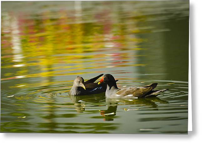 Animals Love Greeting Cards - Paris Love Ducks - Bird Photography Greeting Card by Laria Saunders