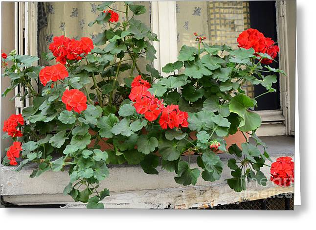 Paris Window Flower Box Geraniums - Paris Red Geraniums Window Flower Box Greeting Card by Kathy Fornal