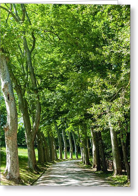 Park And Garden Of Villa Demidoff Greeting Card by Nico Tondini
