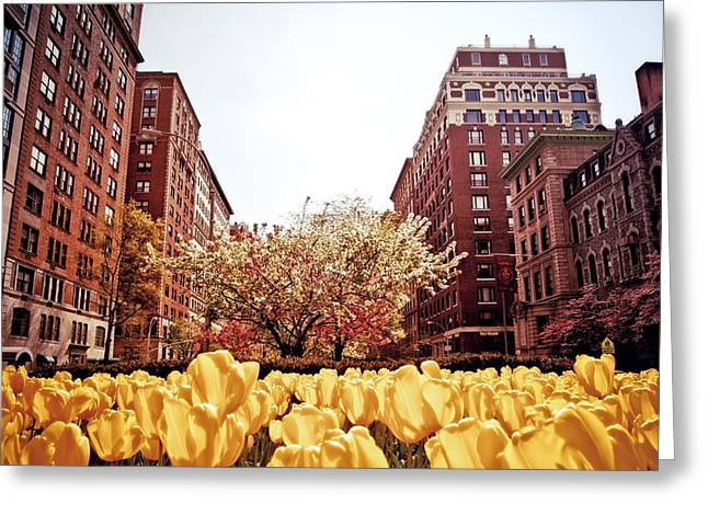 Park Avenue In The Spring  Greeting Card by Vivienne Gucwa