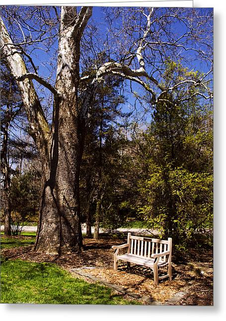 Ithaca Greeting Cards - Park Bench Greeting Card by Christina Rollo