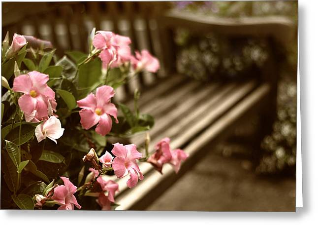 Park Benches Greeting Cards - Garden Repose Greeting Card by Jessica Jenney