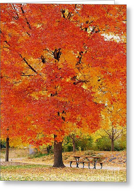 Fall Grass Pyrography Greeting Cards - Park in fall Greeting Card by Yoshiko Wootten