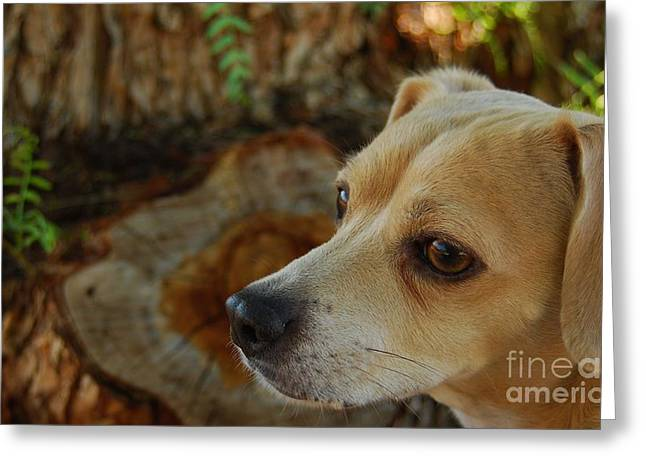 Pound Puppies Greeting Cards - PaRK RanGeR PRiNCESS Betty Greeting Card by Angela J Wright