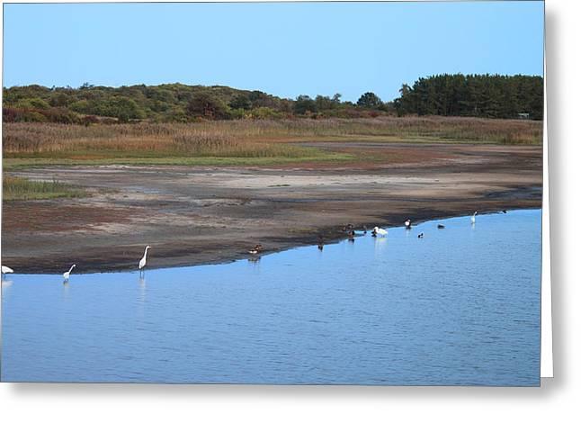 Wildlife Refuge. Greeting Cards - Parker River National Wildlife Refuge Birds Feeding at Dusk Greeting Card by John Burk
