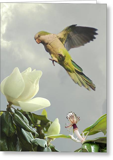 Quaker Greeting Cards - Parrot and Magnolia Tree Greeting Card by Schwartz