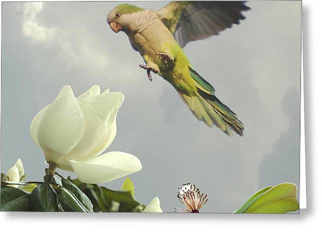 Parrot and Magnolia Tree Greeting Card by Schwartz