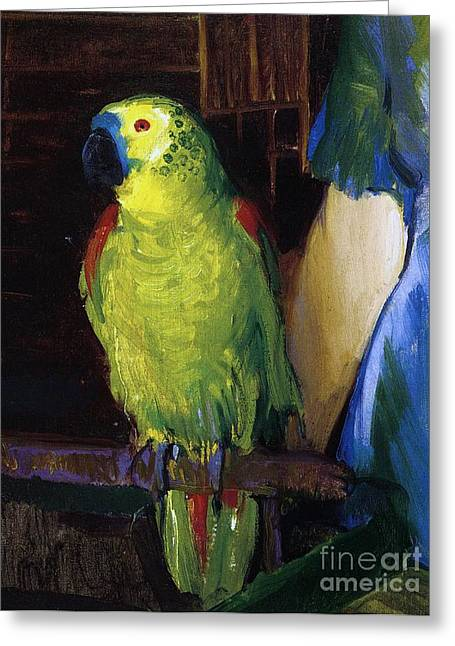 Blue Bird Greeting Cards - Parrot Greeting Card by George Wesley Bellows
