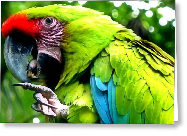 Alertness Paintings Greeting Cards - Parrot Greeting Card by Lanjee Chee