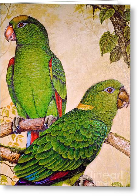 Historical Images Greeting Cards - Parrot Popularity Greeting Card by Gary Keesler