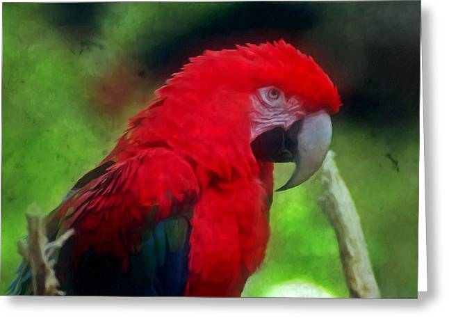 Alertness Paintings Greeting Cards - Parrot - Red Blue Macaw Greeting Card by Lanjee Chee