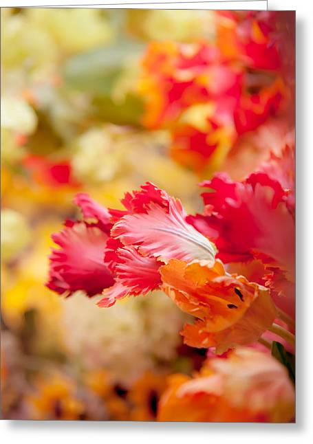 Floating Flowers Greeting Cards - Parrot Tulips 1. Amsterdam Flower Market Greeting Card by Jenny Rainbow