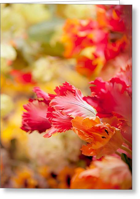 Parrot Tulips 1. Amsterdam Flower Market Greeting Card by Jenny Rainbow