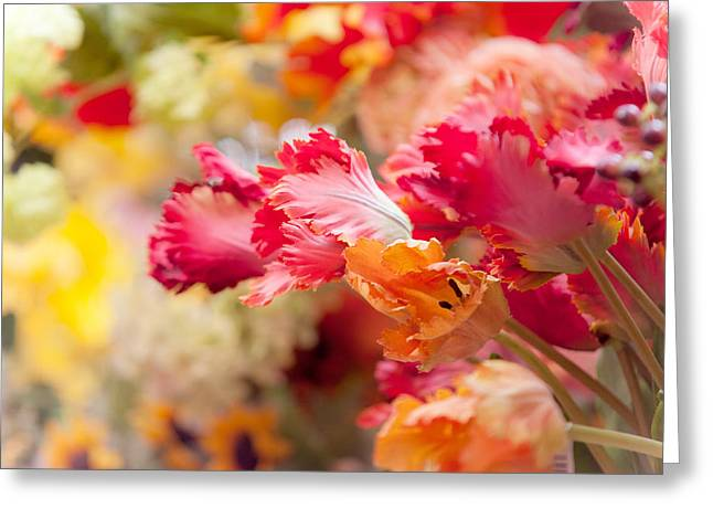 Floating Flowers Greeting Cards - Parrot Tulips. Amstedam Flower Market Greeting Card by Jenny Rainbow