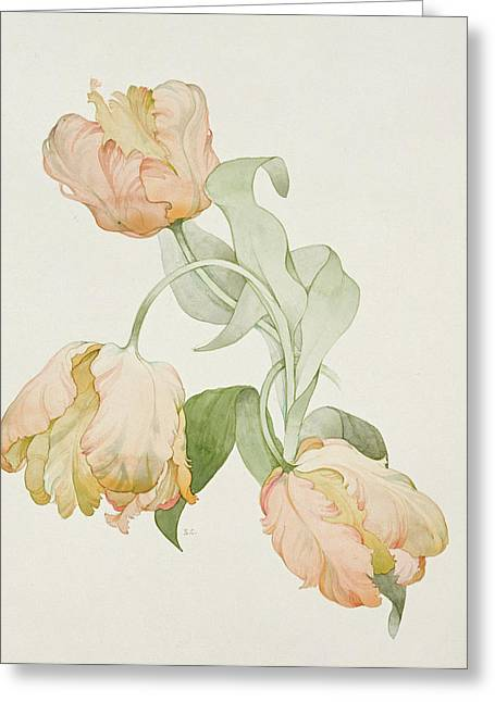 Botanical Greeting Cards - Parrot Tulips Greeting Card by Sarah Creswell