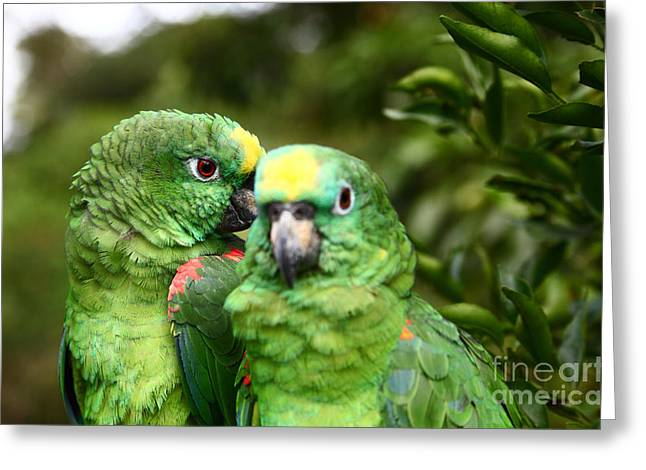 Amazon Parrot Greeting Cards - Parrot Whispers Greeting Card by James Brunker