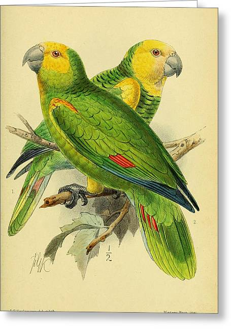 Parrots Greeting Cards - Parrots Greeting Card by J G Keulemans