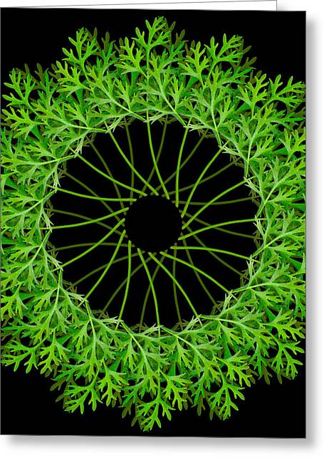 Esotericism Greeting Cards - Parsley Greeting Card by Ilse Geitmann