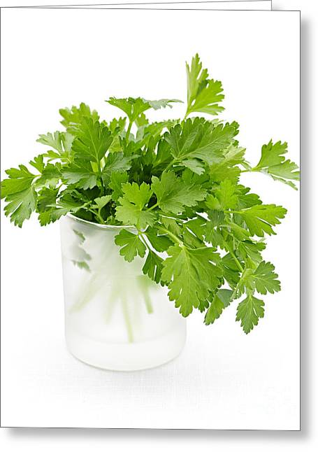 Healthy Greeting Cards - Parsley on white  Greeting Card by Elena Elisseeva