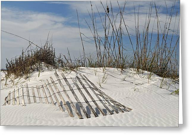 Photogaphy Greeting Cards - Partially Buried Fence on Florida Gulf Coast Sand Dunes Greeting Card by Bruce Gourley