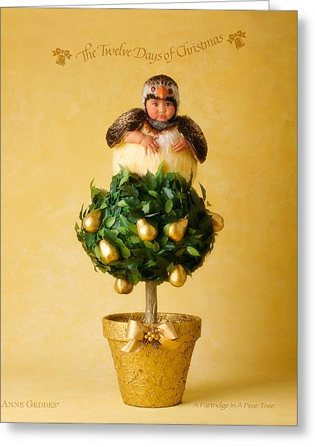 12 Days Of Christmas Greeting Cards - Partridge in a Pear Tree Greeting Card by Anne Geddes