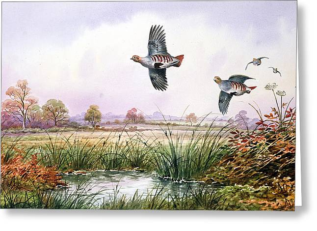 Partridge In Flight Greeting Card by Carl Donner