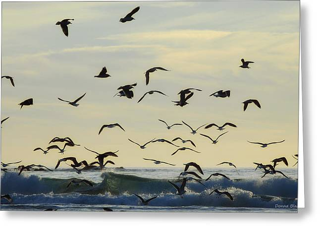 Flying Seagull Greeting Cards - Party Is Over Greeting Card by Donna Blackhall