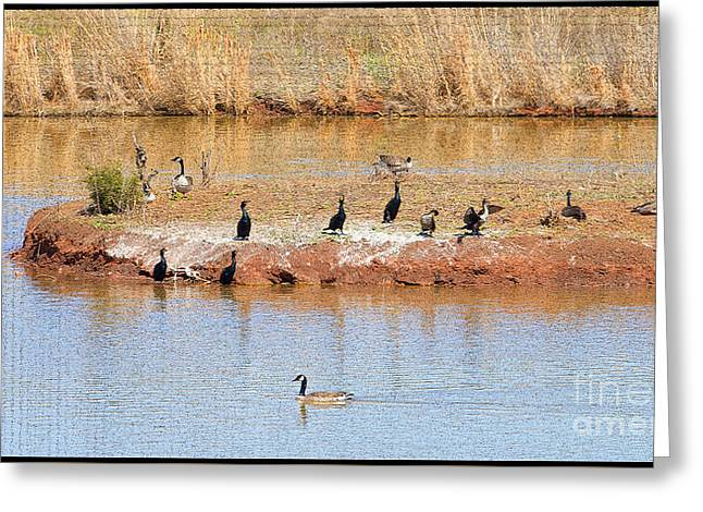 Geese Greeting Cards - Party Island Greeting Card by Betty LaRue
