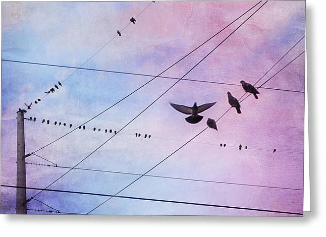 Bird Photography Greeting Cards - Party Line Greeting Card by Amy Tyler