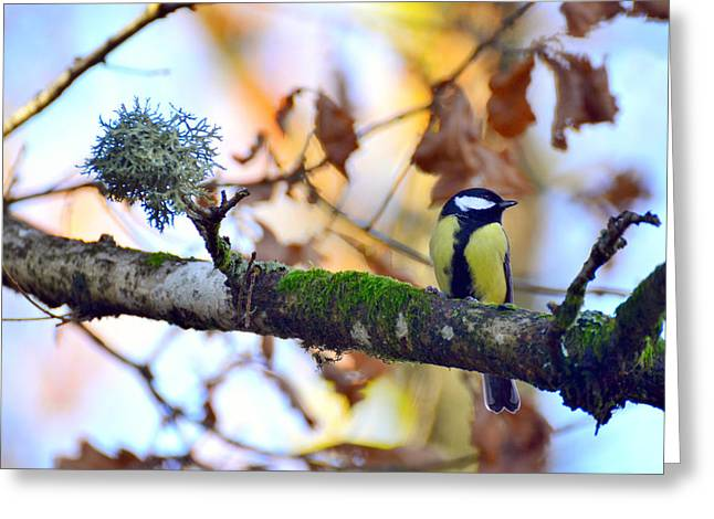 Parus Major Greeting Card by Toppart Sweden