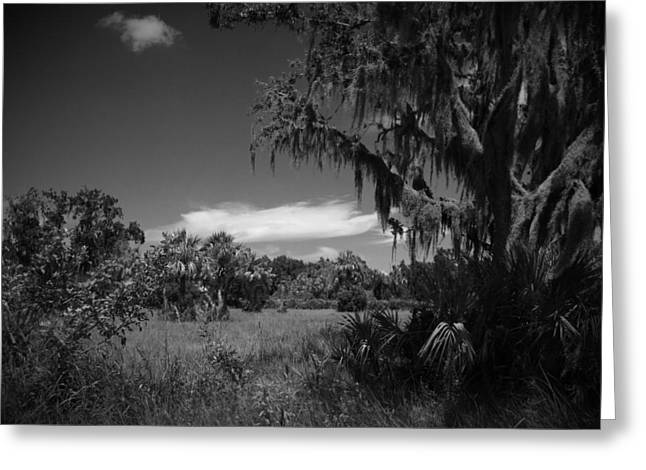 Pasco County Greeting Cards - Pasco Number 2 Greeting Card by Phil Penne