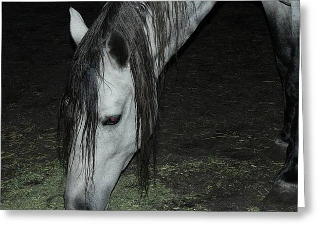 Paso Fino Stallion Greeting Cards - Paso Fino Feeding Greeting Card by George Pedro