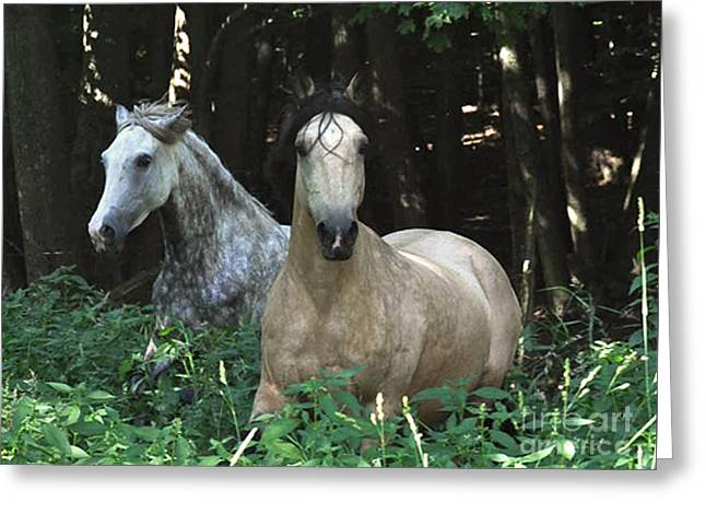 Paso Fino Mares Pay Attention Greeting Card by Patricia Keller