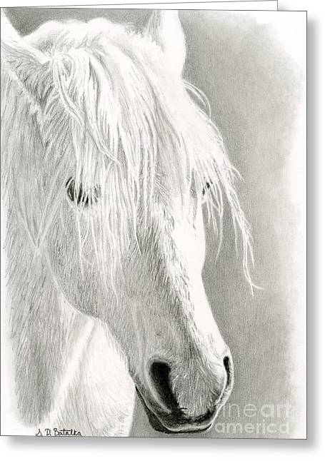 Western Pencil Drawings Greeting Cards - White Horse- Paso Fino Greeting Card by Sarah Batalka