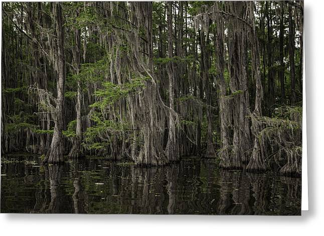 """caddo Lake"" Greeting Cards - Passageway Greeting Card by John Hesley"